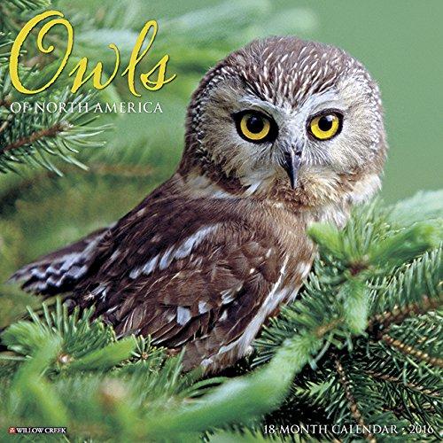 2016 Owls Wall Calendar: Willow Creek Press