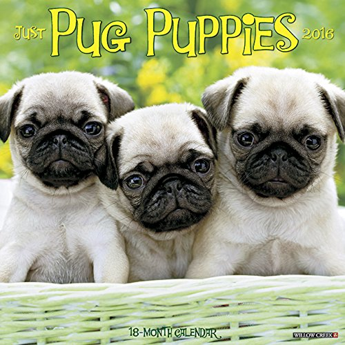 9781623437763: 2016 Just Pug Puppies Wall Calendar