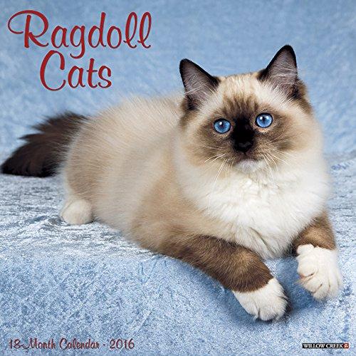9781623437800: 2016 Ragdoll Cats Wall Calendar