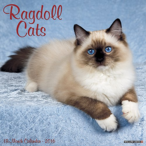 9781623437800: Ragdoll Cats 2016 Calendar