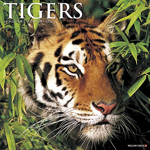 2016 Tigers Wall Calendar: Willow Creek Press
