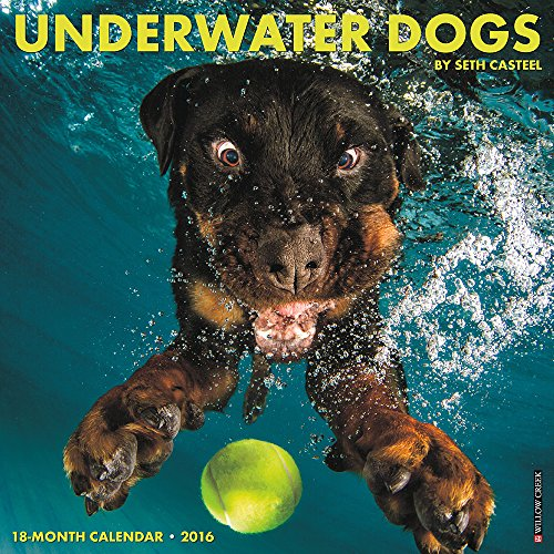 9781623438159: Underwater Dogs Calendar