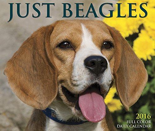 9781623438661: Just Beagles 2016 Calendar