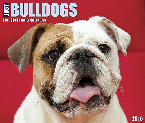 9781623438692: Just Bulldogs 2016 Calendar