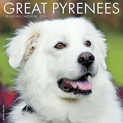 9781623439019: 2016 Just Great Pyrenees Wall Calendar