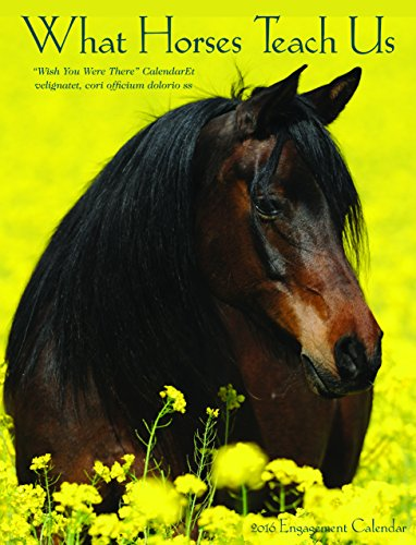 2016 What Horses Teach Us Engagement Calendar: Willow Creek Press