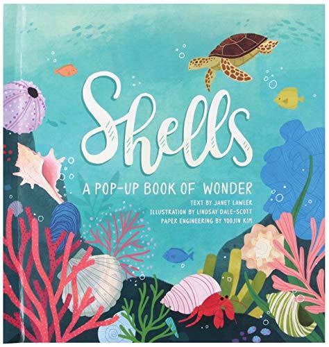 9781623485269: Shells: A Pop-up Book of Wonder (4 Seasons of Pop-Up)