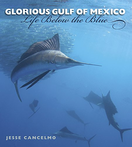 Glorious Gulf of Mexico: Life Below the Blue (Gulf Coast Books): Jesse Cancelmo