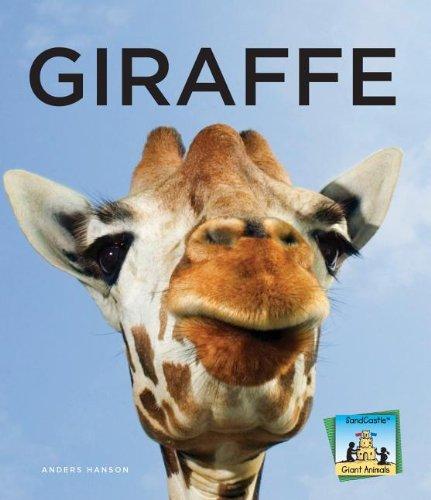 9781624030581: Giraffe (Giant Animals)