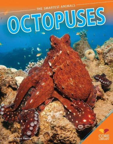 9781624031694: Octopuses (Smartest Animals)