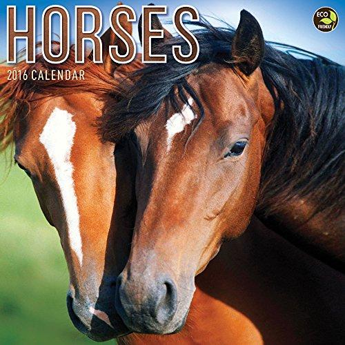 9781624380815: Horses 2016 Calendar