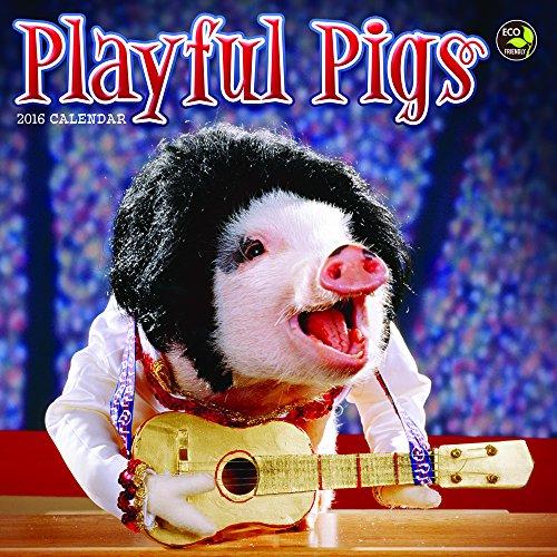 9781624381966: Playful Pigs 2016 Calendar