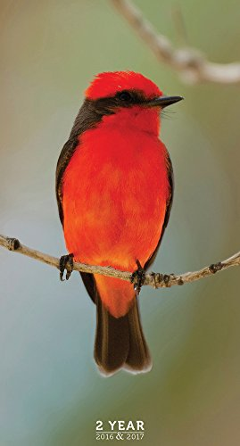 9781624383595: 2016-2017 Backyard Birds 2 Year Pocket Calendar