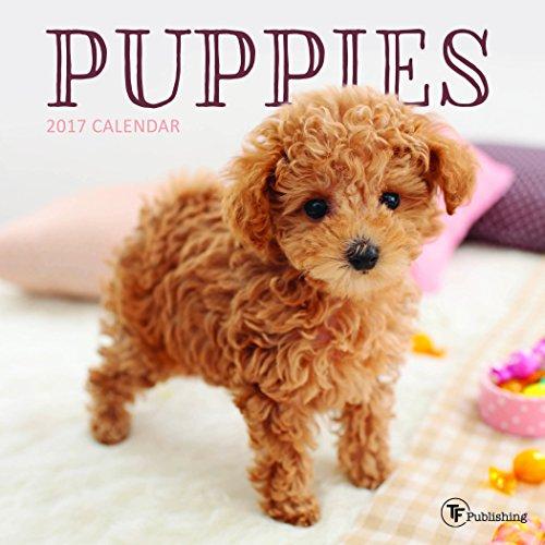 9781624387807: 2017 Puppies Mini Calendar