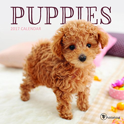 2017 Puppies Mini Calendar: TF Publishing