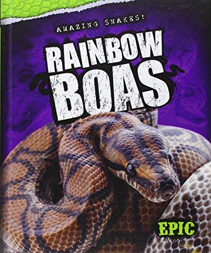 9781626171251: Rainbow Boas (Amazing Snakes!)