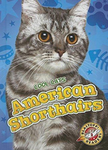 9781626172302: American Shorthairs (Blastoff Readers Cool Cats: Level 2)