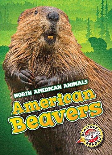 American Beavers (Hardcover): Megan Borgert-Spaniol