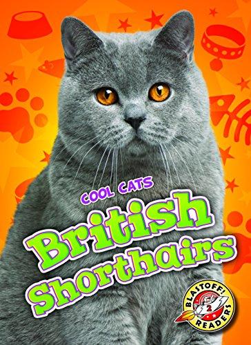 9781626173958: British Shorthairs (Cool Cats)
