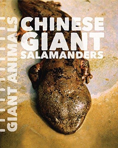 9781627129602: Chinese Giant Salamanders (Giant Animals)