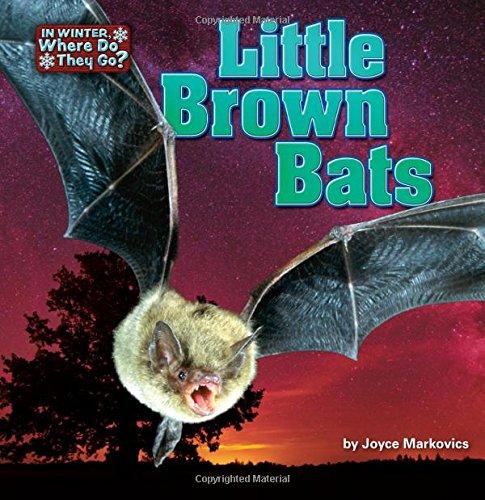 Little Brown Bats (Library Binding): Joyce L. Markovics