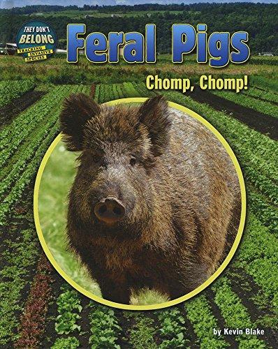 Feral Pigs: Chomp, Chomp! (Hardcover): Kevin Blake