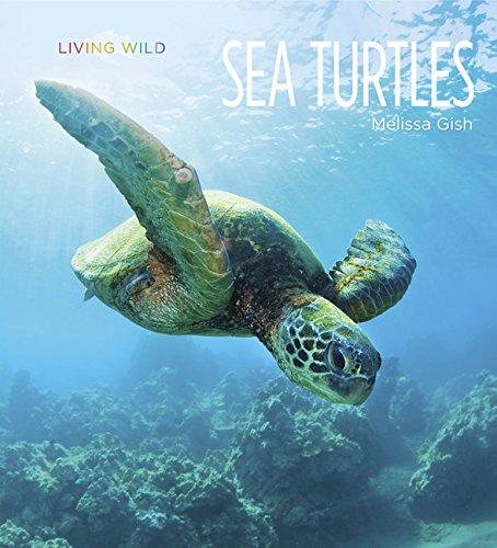 9781628320053: Living Wild: Sea Turtles
