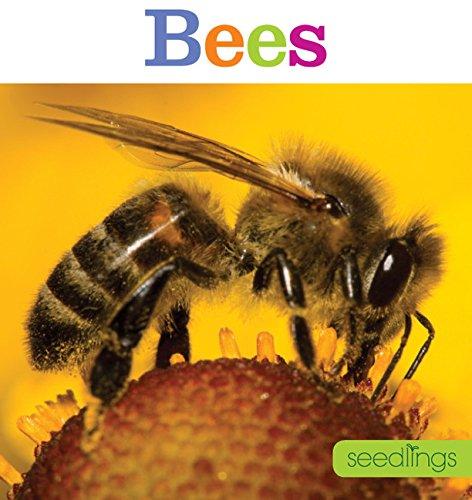 9781628320381: Seedlings: Bees