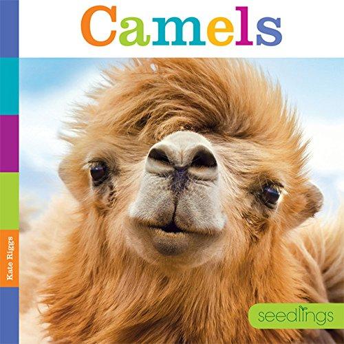 9781628321135: Seedlings: Camels