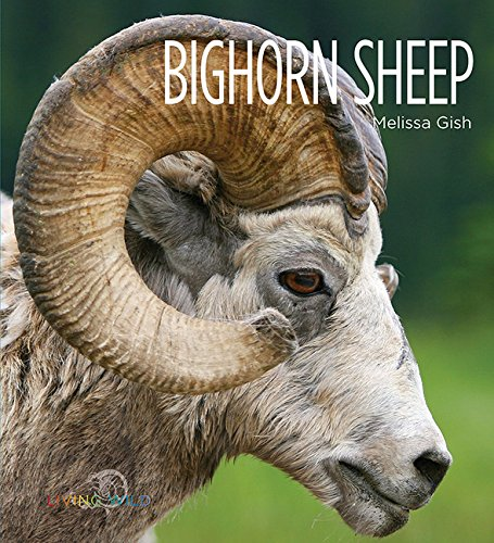 Bighorn Sheep: Living Wild: Melissa Gish
