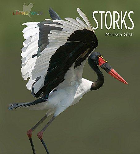 9781628321722: Storks (Living Wild)