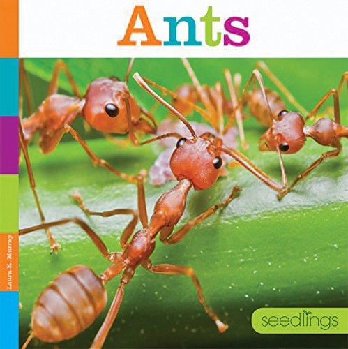 Ants: Seedlings: Laura K Murray