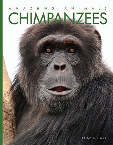 9781628322163: Chimpanzees (Amazing Animals)