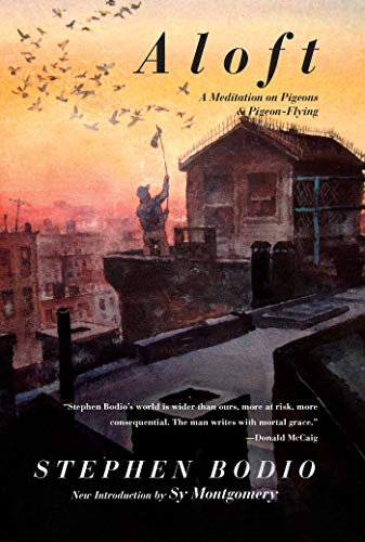 9781628736724: Aloft: A Meditation on Pigeons & Pigeon-Flying