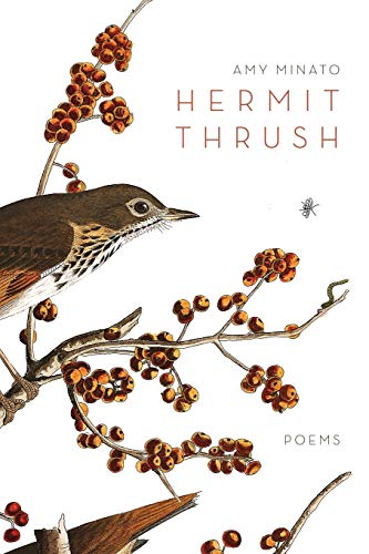 Hermit Thrush: Amy Minato
