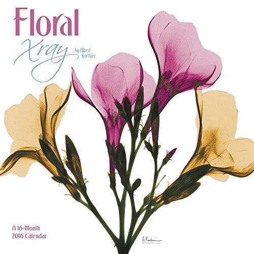 9781629054001: Floral Xray by Albert Koetsier Wall Calendar (2016)