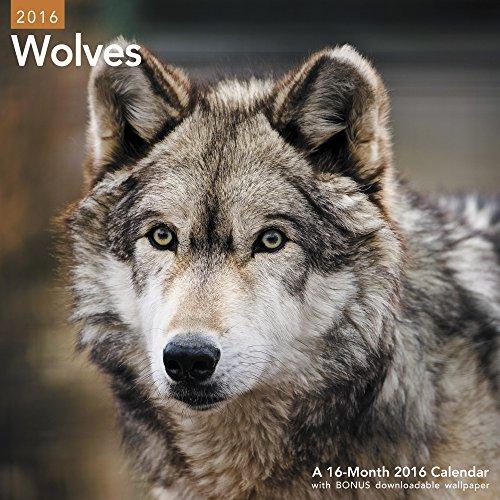 9781629054438: Wolves Wall Calendar (2016)