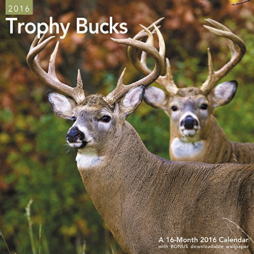 9781629054520: Trophy Bucks Wall Calendar (2016)