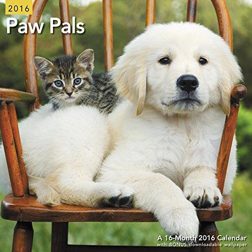 9781629054551: Paw Pals Wall Calendar (2016)