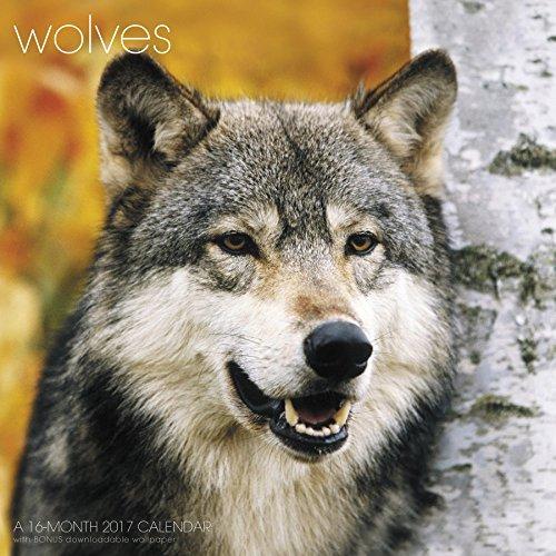9781629057705: Wolves Wall Calendar (2017)
