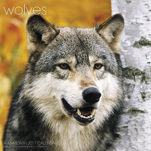 Wolves Wall Calendar (2017)
