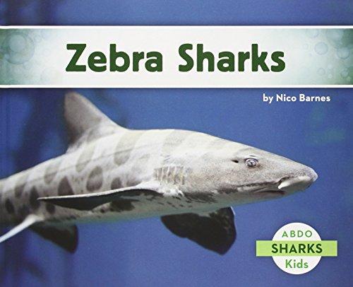 Zebra Sharks: Barnes, Nico