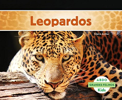 Leopardos (Abdo Kids: Big Cats) (Spanish Edition): Archer, Claire