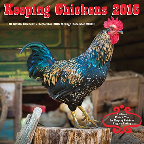 Keeping Chickens 2016: 16-Month Calendar September 2015 through December 2016: Editors of Rock Point