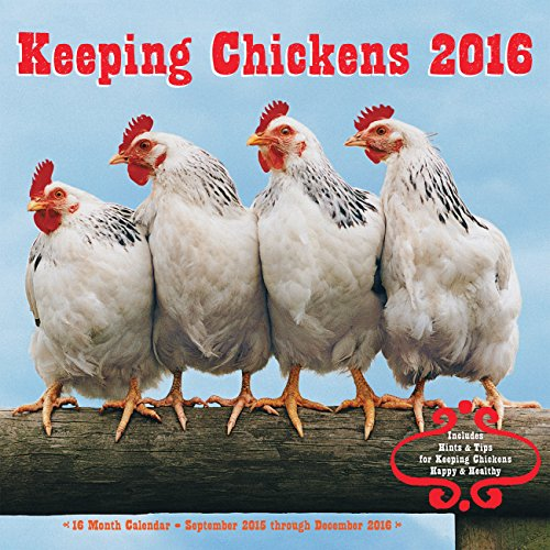 9781631061042: Keeping Chickens 2016 Calendar