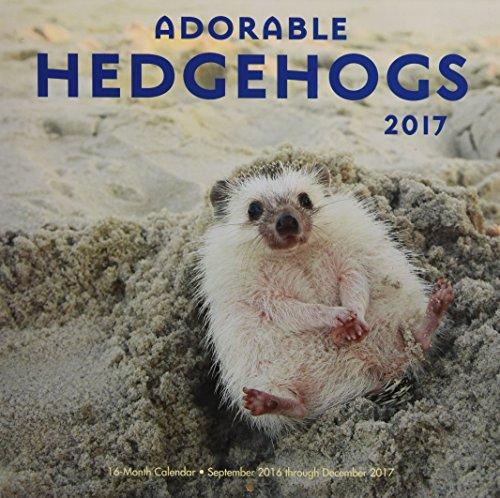 9781631062100: Adorable Hedgehogs 2017: 16-Month Calendar September 2016 through December 2017