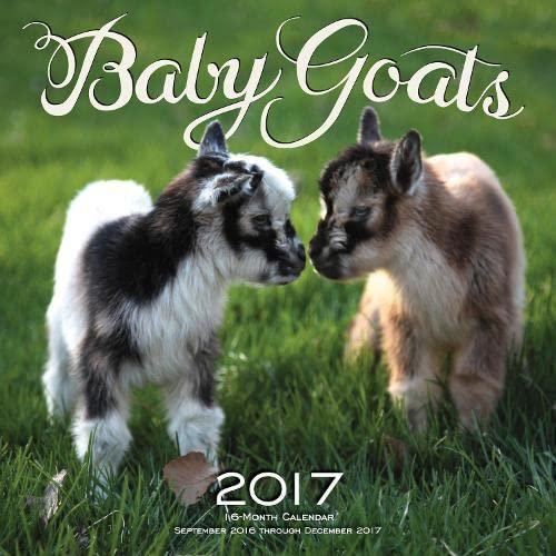 Baby Goats 2017: 16-Month Calendar September 2016 through December 2017: Editors of Rock Point