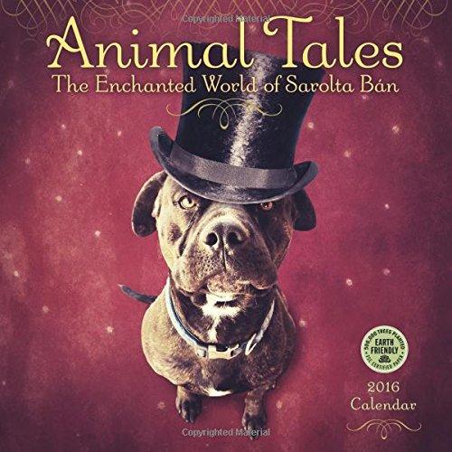 Animal Tales 2016 Wall Calendar: The Enchanted: Sarolta Ban, Amber
