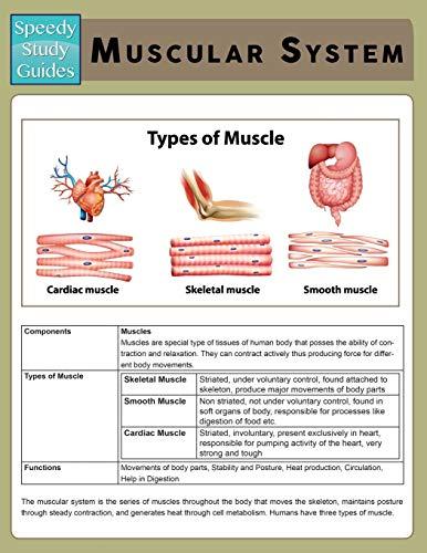 9781632871817: Muscular System (Speedy Study Guide)
