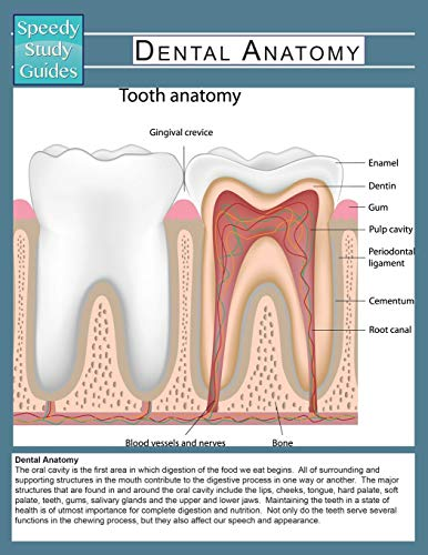 9781633838895: Dental Anatomy (Speedy Study Guide)